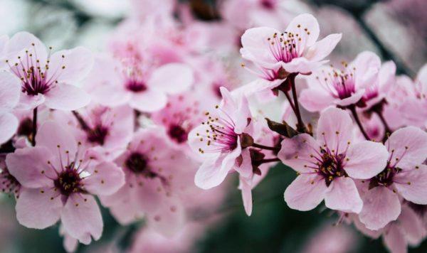 Poesie Primavera