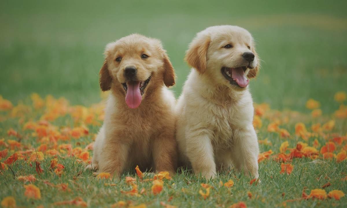 Frasi Cani inglese