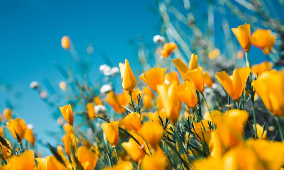 poesie fiori