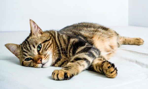 poesie gatti